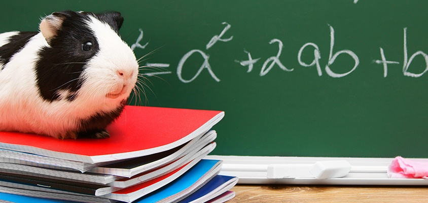 Pets in the Classroom Gerbil