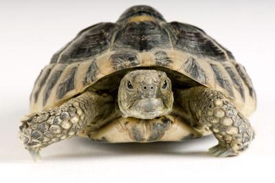 Turtle Pet Resource Center